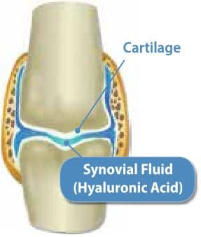 Synovoial fluid and cartilage in the joints diagram